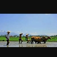 Bali tours and farming culture
