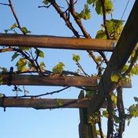 Sous Les Vignes Sivry-Chimay