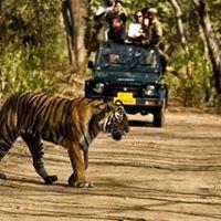 India Jungle Tours