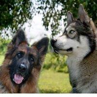 Transformation Canine