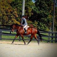 Alva Glen Sporthorses