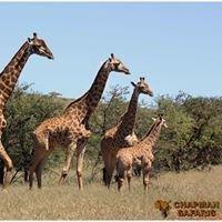 Chapman Safaris Exotic Game Breeders