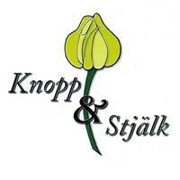 Knopp & Stjälk