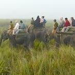 Kaziranga Tours & Travels