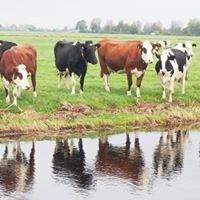 Biologische Kaasboerderij Vrede-Oord