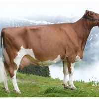 Rebin Holstein