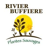 Rivier-Buffière Plantes Sauvages