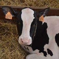 Hazenpad Holsteins