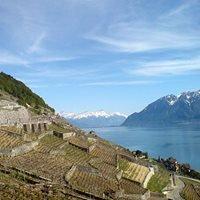 Lavaux, Vineyard Terraces - Unesco World Heritage