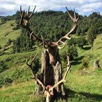Aotearoa Safaris - Huntdownunder