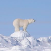 Arctic World - Polar trips and expeditions