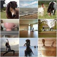 Ölands YogaStudio & Islandshästar, Kollberggården