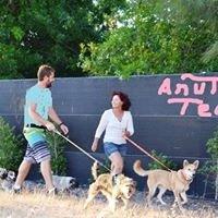 Anut Cat and Dog Hotel