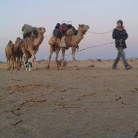 Flinders and Beyond Camel Treks