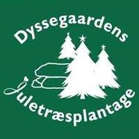 Dyssegaardens Juletræsplantage
