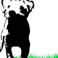 Tierarzt Kleintierpraxis Lend