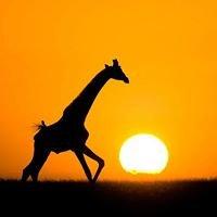 My Kenya Travel