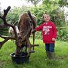 Haughton Park Reindeer