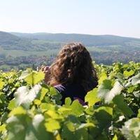 Vinipôle Sud Bourgogne