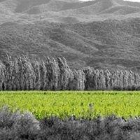 Bodega Fabril Alto Verde - Organics Wines