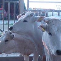 Azienda Agricola Stiaccini Diego