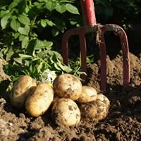 Storøhage Kartofler A/S