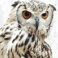 あうるぱーく フクロウカフェ池袋 Owlpark(owlcafe ikebukuro