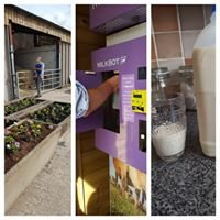 Shelford cottage farm grass fed  Raw milk vending machine