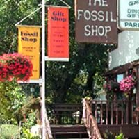 The Fossil Shop inc.