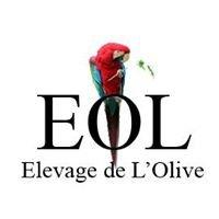 EOL Elevage de L'Olive - Perroquets