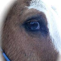 Hidden Hills Farm & Saddle Club