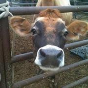 Healthyway Dairy