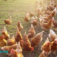 Ednam Organic Eggs