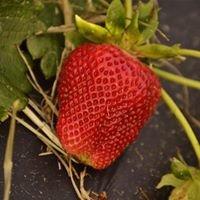 3 Jamison Berry  Farm