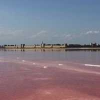 La Camargue À Aigues Mortes