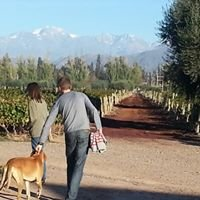 Mendoza Vineyards Wine Tours