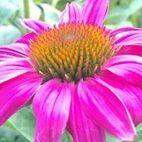 Scioto Blooms Greenhouse
