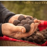 Truffe  Sud Cevennes