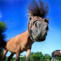 Domaine Equestre de Maruejols, Au coeur de La Garrigue Gardoise