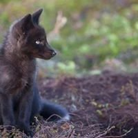 California Wolf Recovery Center