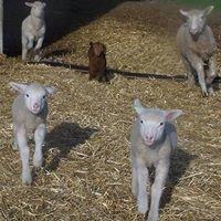 Northcroft Wool