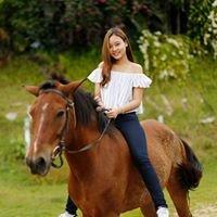 Horse Riding Club at Phangnga Viewpoint