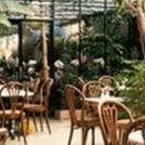 Cafe Orchidee & Orchideen Netzer