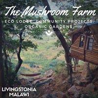 The Mushroom Farm Eco-Lodge & Manchewe Community Projects
