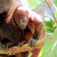 Monkey Bay Marina / Rio Dulce