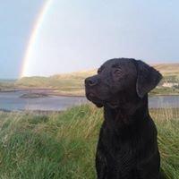 Highland Pet Care