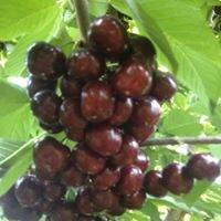Alpine Fruit.
