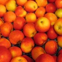 Kvam Fruktlager As