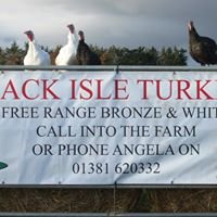 Black Isle Turkeys