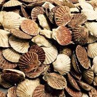 Kallin Shellfish Ltd